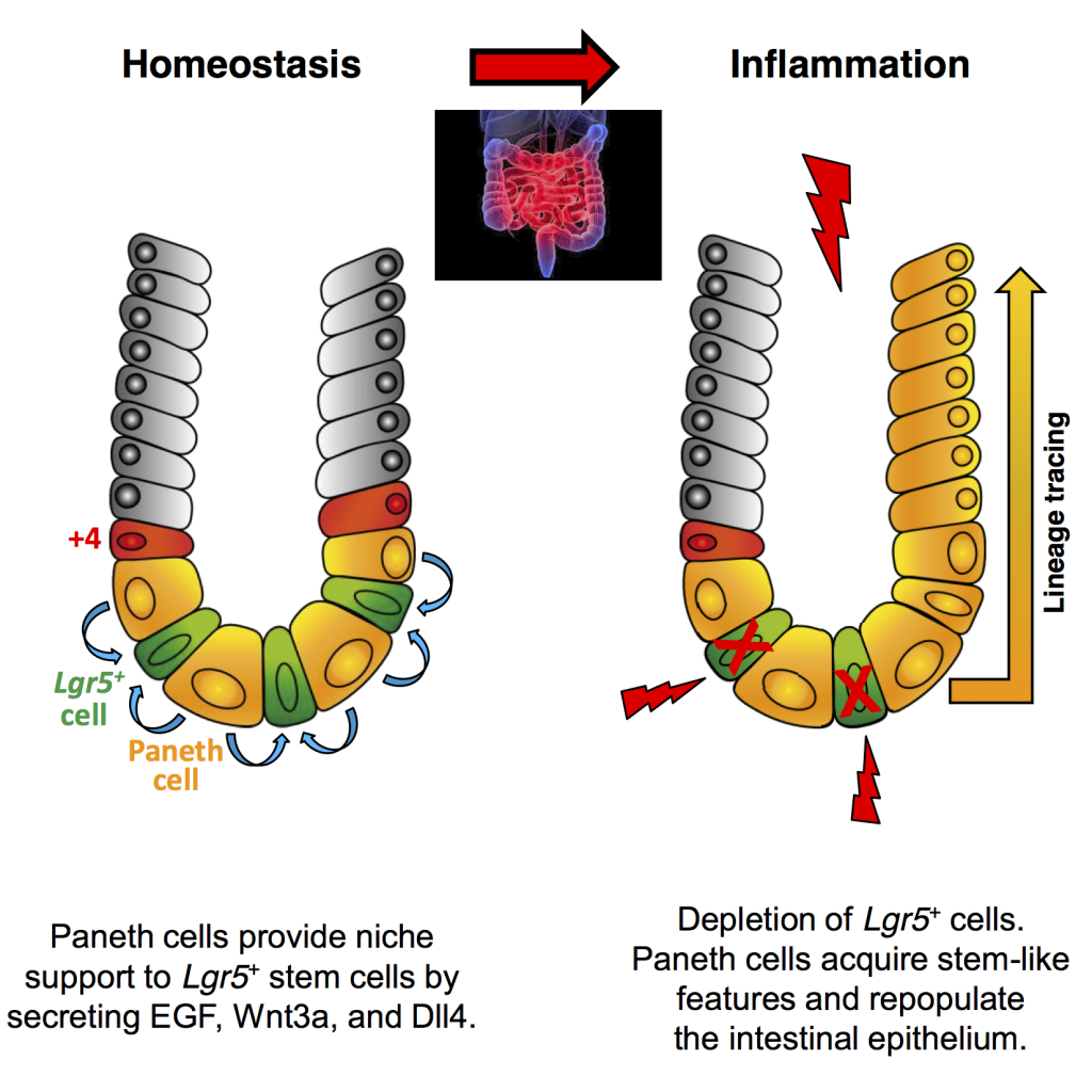 Schmitt Schewe et al Cell Reports Graphical Abstract